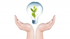 Hand holding light bulb with plant